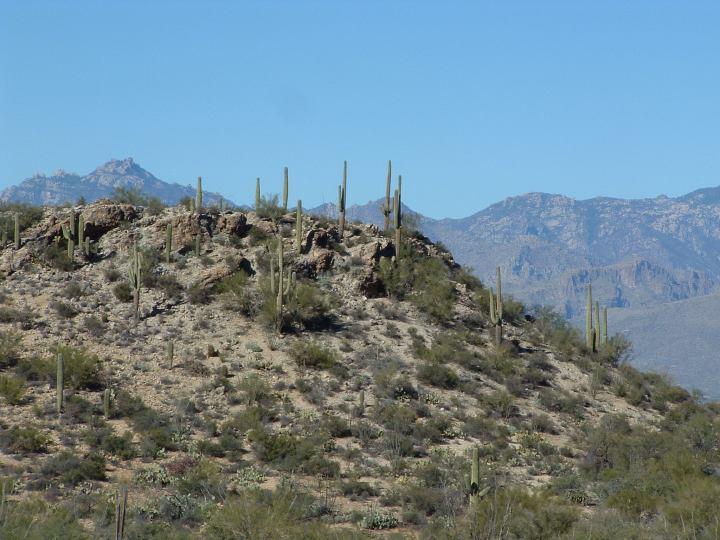 Organ Pipe Cactus National Monument Camping